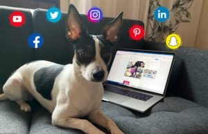 Digimys Oy | sosiaalisen median hyödyntäminen